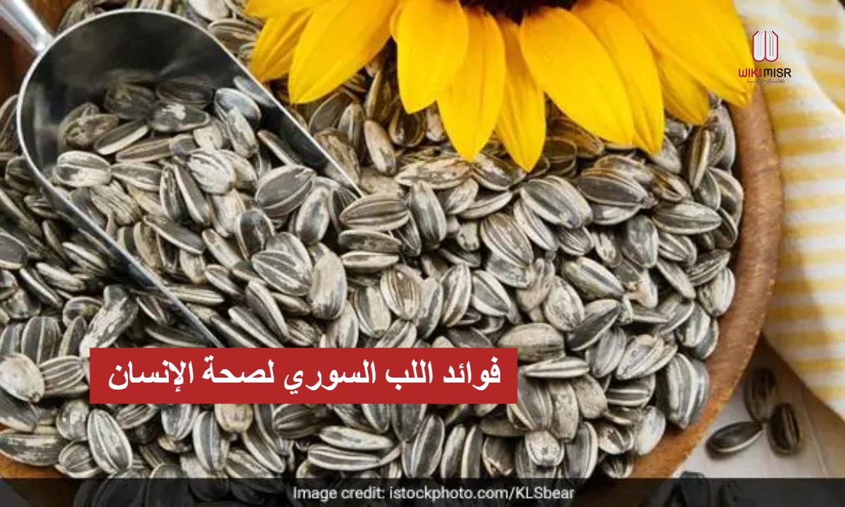 6 فوائد لـ اللب السوري للجسم وصحة الإنسان