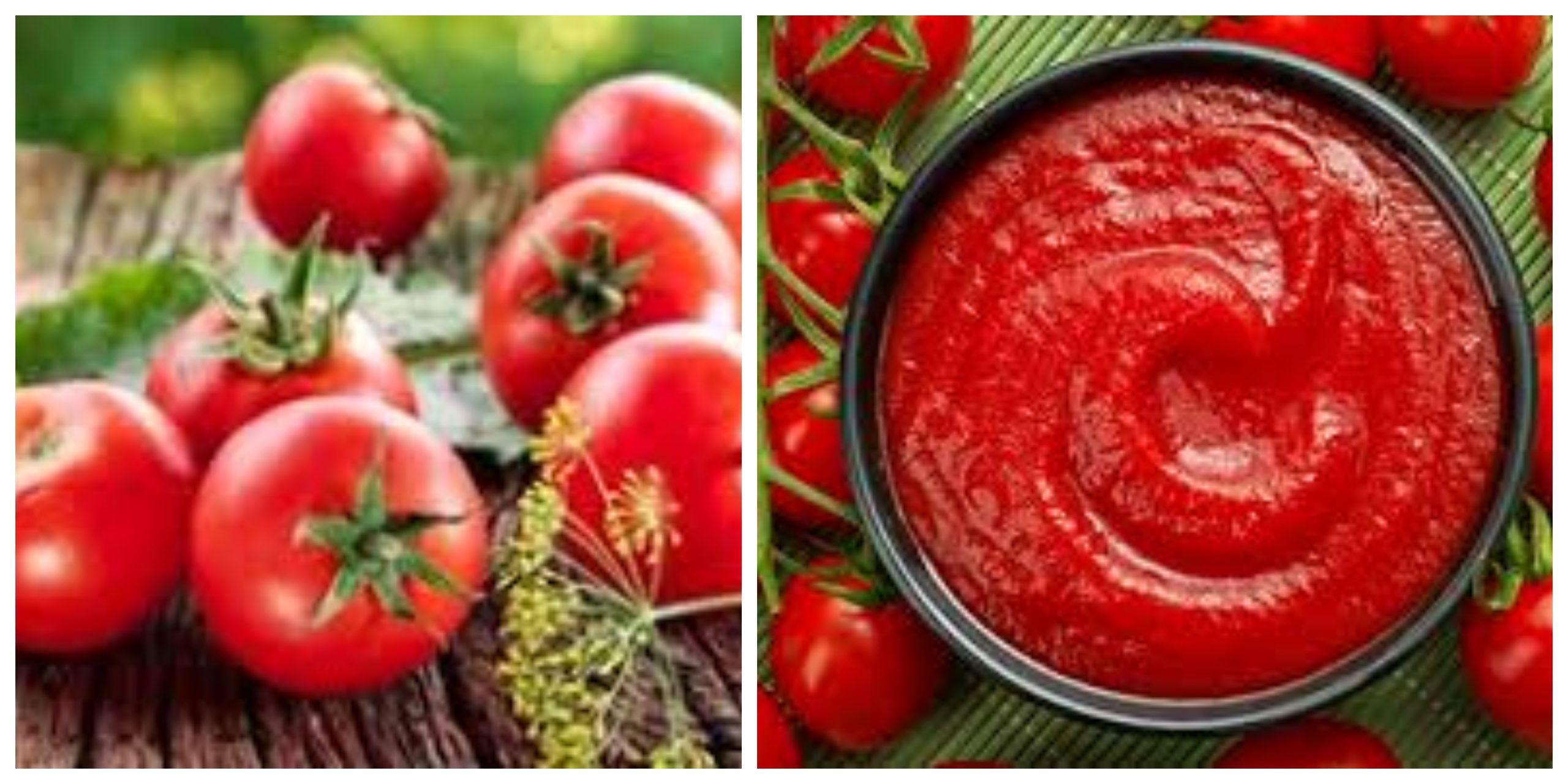 أفضل بدائل لاستخدام الطماطم المهروسة في الطبخ