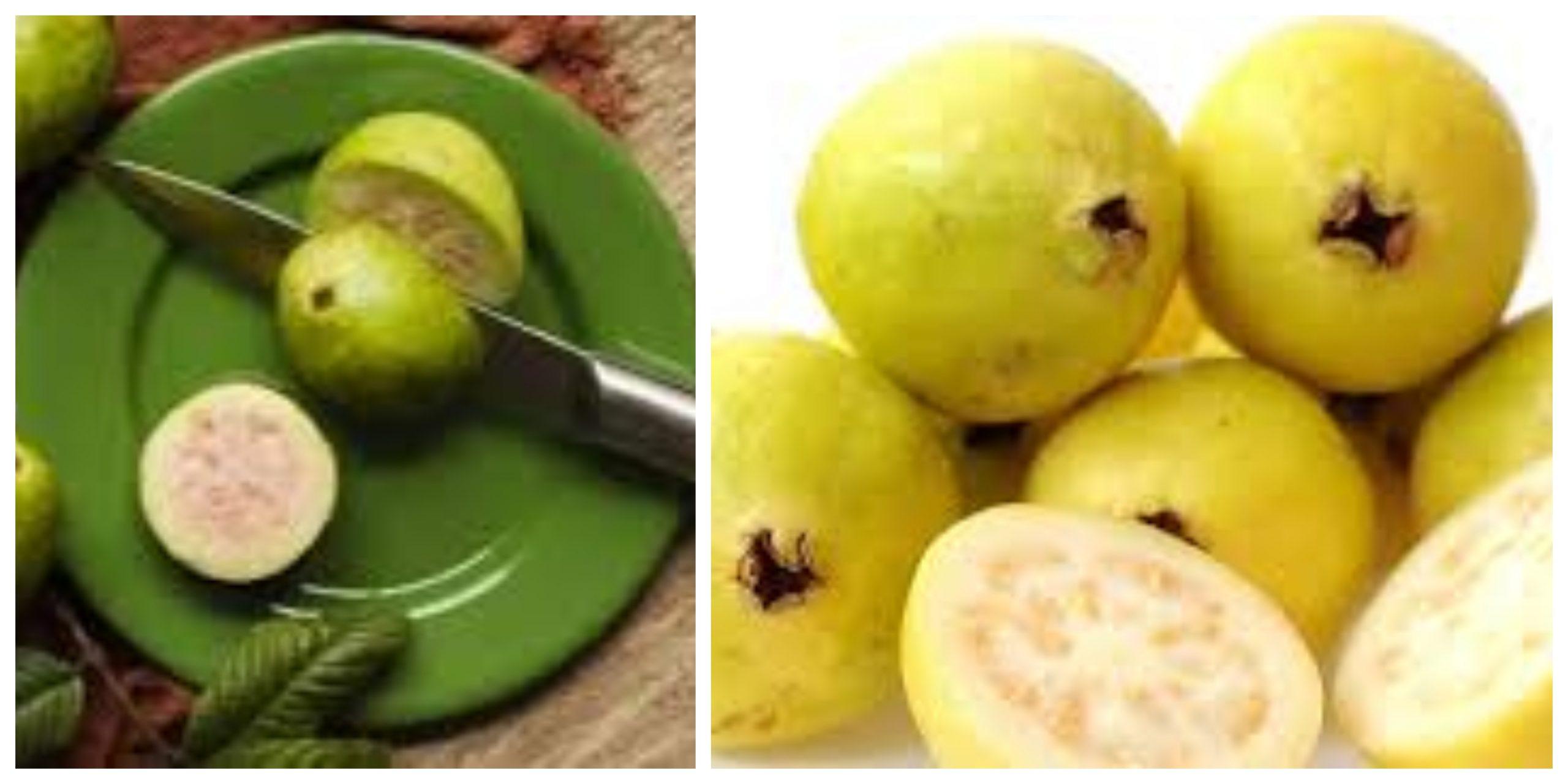 الفوائد الصحية لتناول ثمار الجوافة