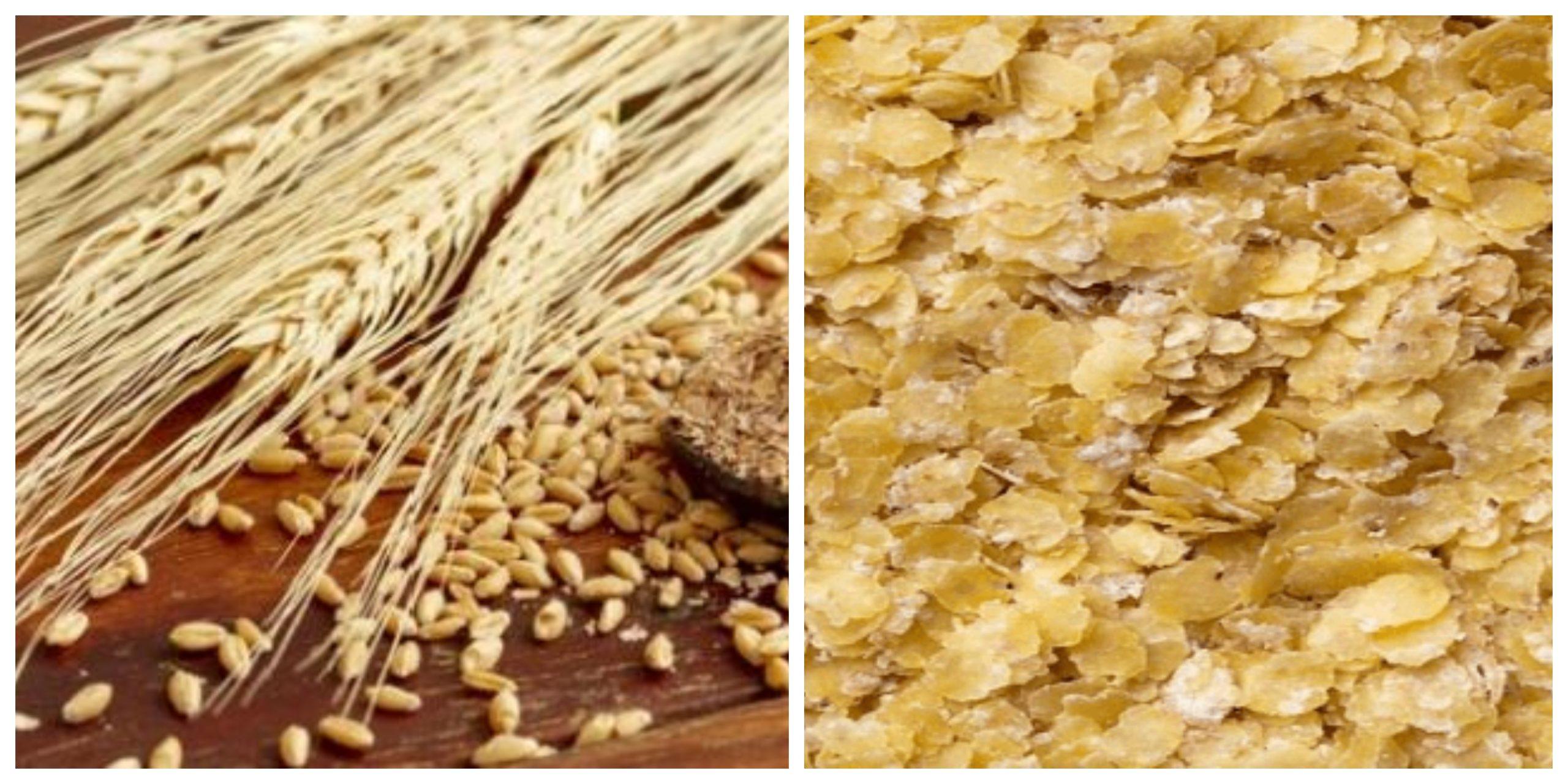 ريجيم القمح يمكنه التخلص من الكرش بسرعة فائقة.. فوائده وآثاره الجانبية