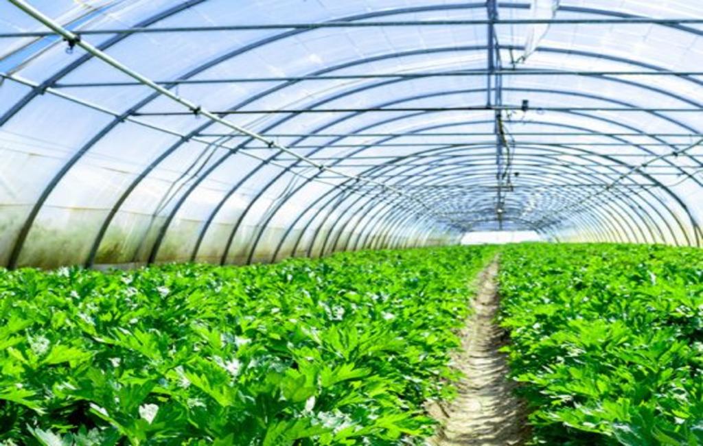 دراسة جدوى إنشاء الصوب الزراعية 2020