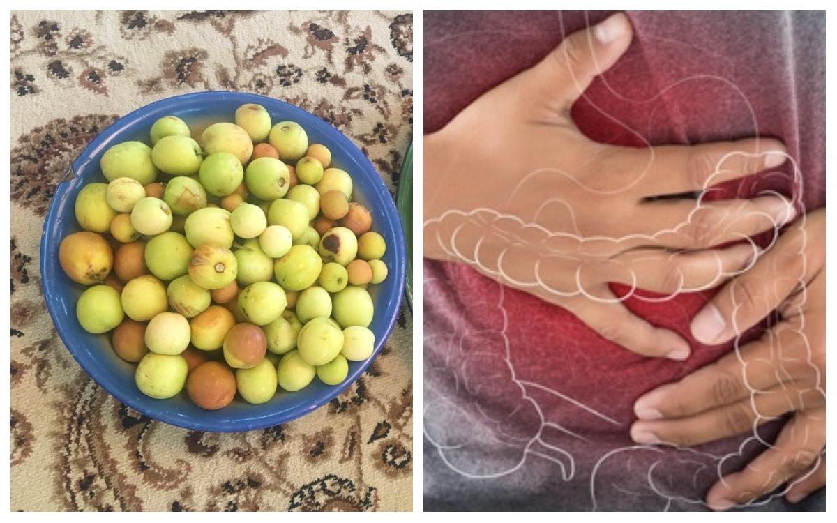 فوائد النبق يعالج القولون العصبي ويمنع تساقط الشعر ويكي مصر Wikimisr