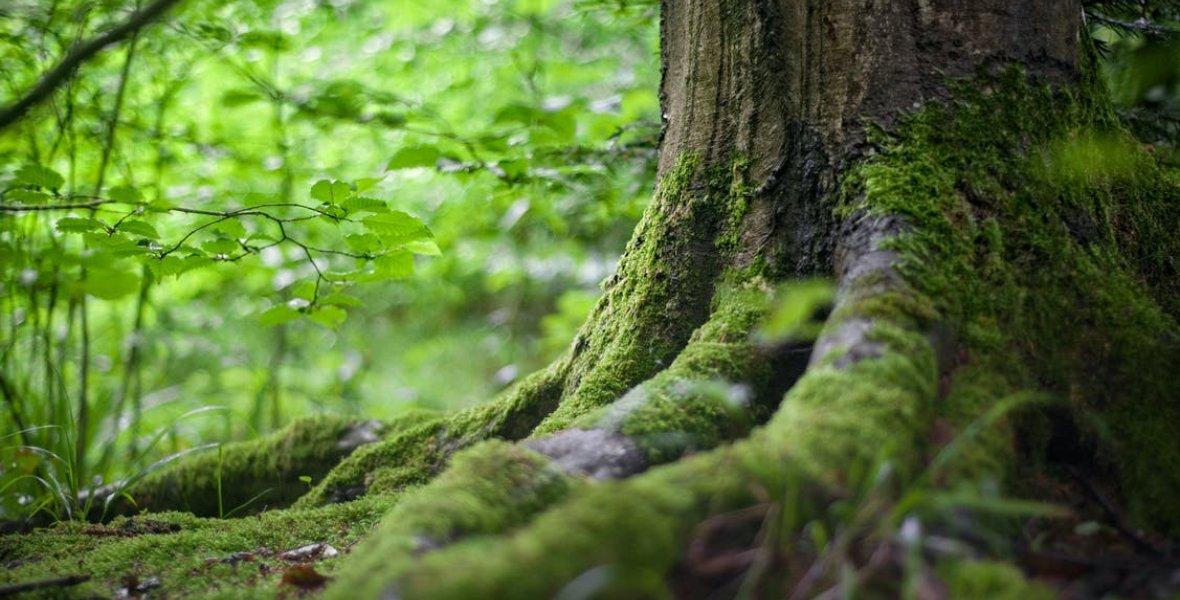 تحميل خلفيات طبيعية للموبايل