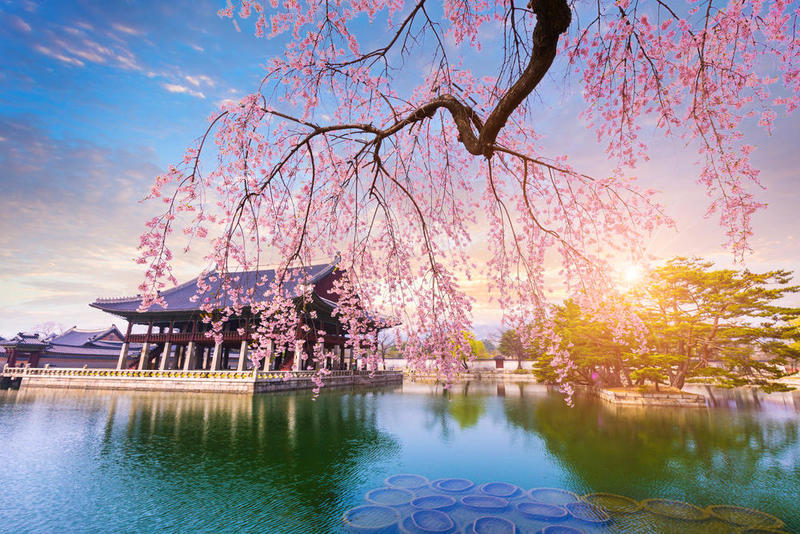 صور من كوريا جديدة وجميلة