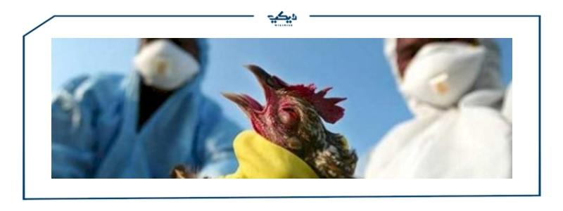 فيروس انفلونزا الطيور وسلالة H10N3 اعراض وسبل الوقاية