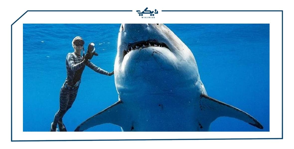 تعريف سمك القرش