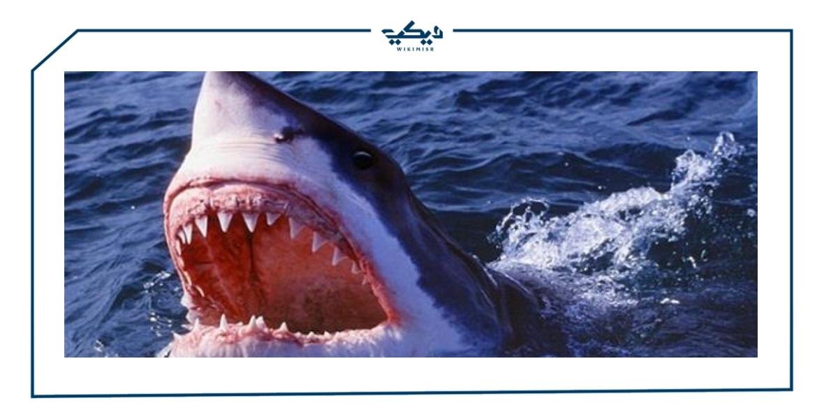تكاثر سمك القرش