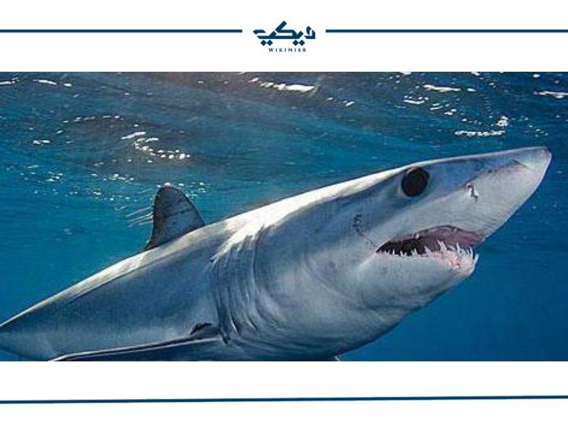 ما هو سمك القرش وكيف يتكاثر وما هي أنواعه ؟