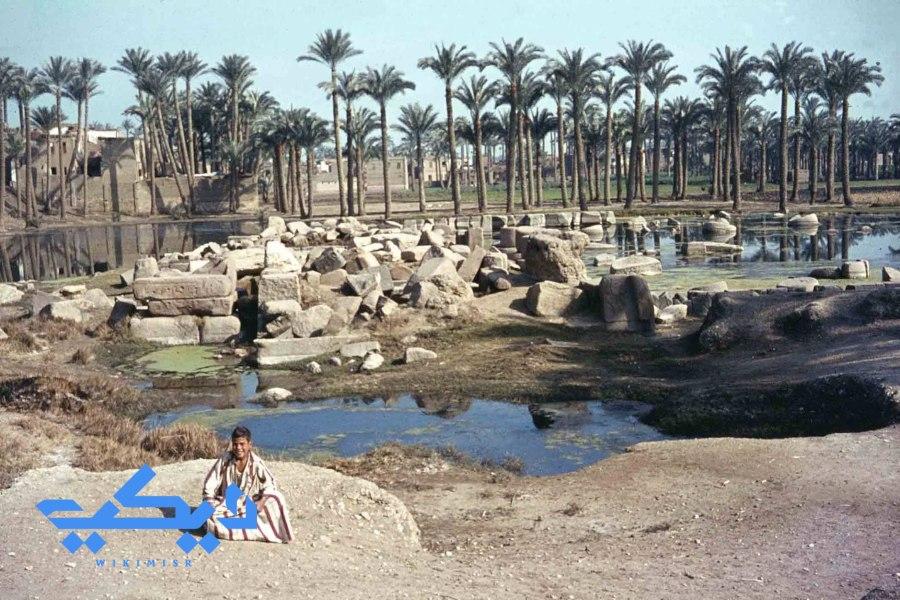 اطلال معبد بتاح فى منف 1960.