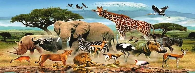 أنواع وتصنيف الحيوانات وتنوع سلوكها