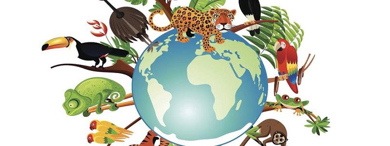 أنواع وتصنيف الحيوانات