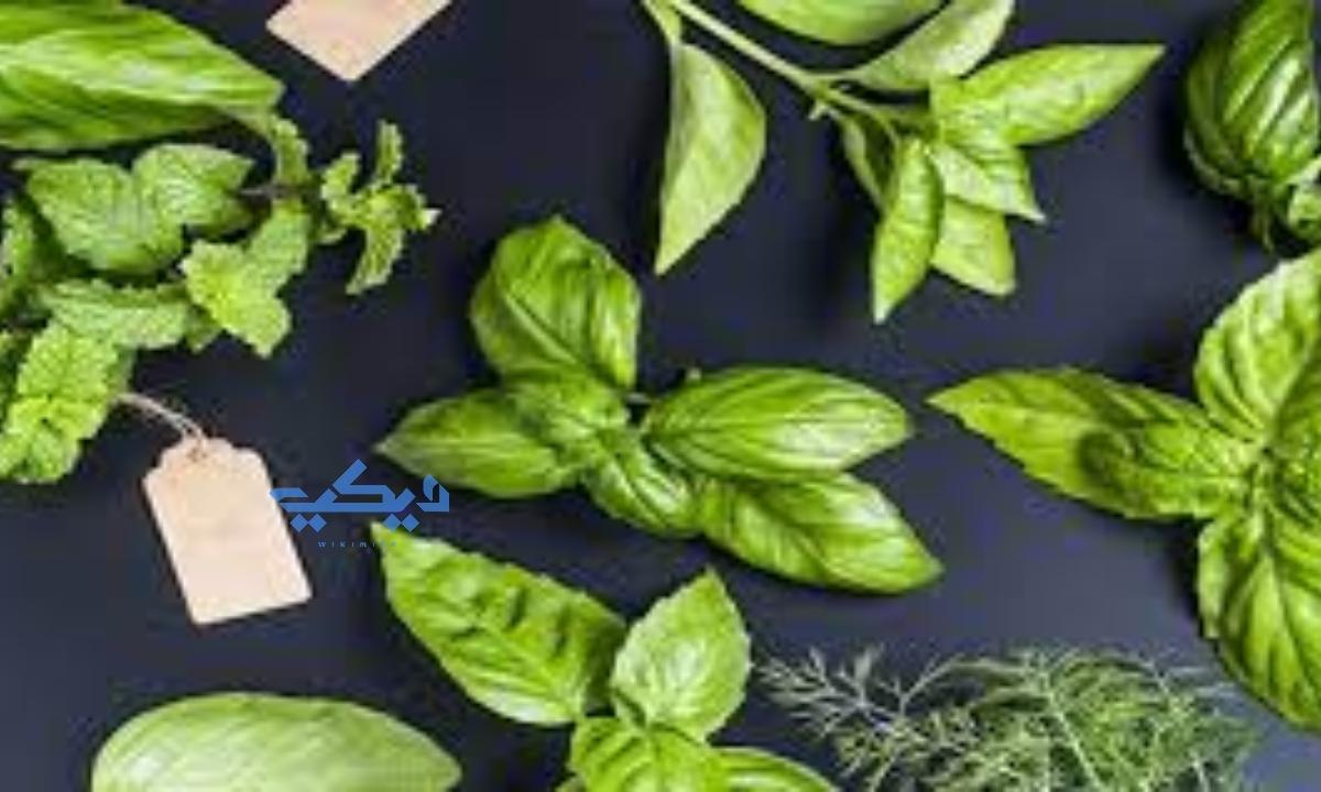 تنظيم الهرمونات بالأعشاب